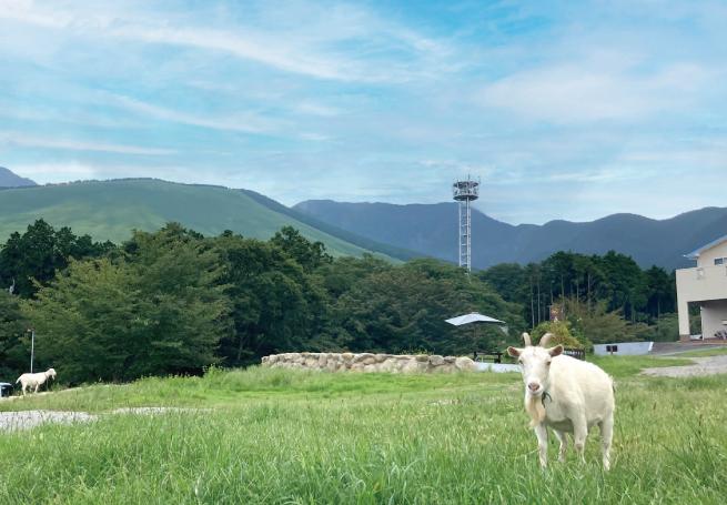 森藩別邸ファームの風景