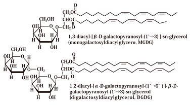 新規藻類(RG藻類)から糖脂質を抽出・精製