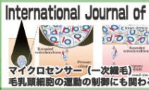 International Journal of Sciences